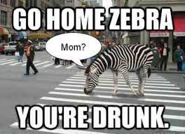 Go Home Meme - funny meme go home zebra you are drunk picture
