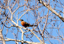 bible conference and birds in south carolina s birdwatching