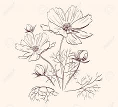 beautiful flower sketches colour drawing free wallpaper beautiful