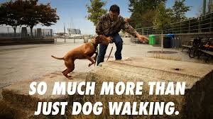 nyc dog walkers nyc dog walker nyc pet sitter nyc dog sports