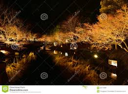 light up tree winter illumination in mie japan stock photo