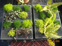 living how to build a succulent wall garden f84 how to make a