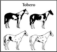 paint horse patterns patterns kid