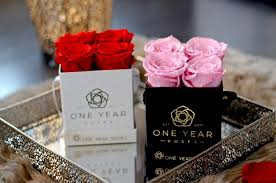 enchanted rose that lasts a year one year roses uk real roses that last for 1 year