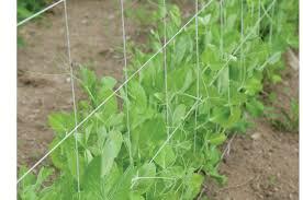 trellis plus 5 u0027 x 60 u0027 johnny u0027s selected seeds