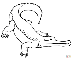 caiman coloring page free printable coloring pages
