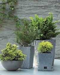 Herb Garden Winter - 25 trending winter container gardening ideas on pinterest
