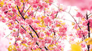wallpapers tagged with flowers flowers hd wallpapers page 1