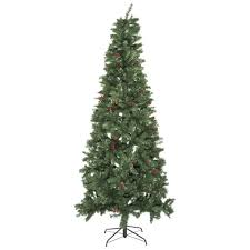 slim montana spruce tree with pine cones and berries