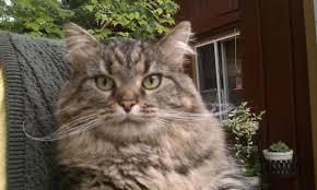 Cute Cat Meme Generator - funny cats part 207 40 pics 10 gifs amazing creatures