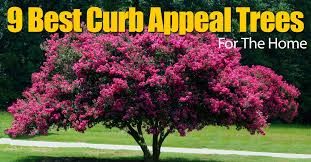 9 best curb appeal trees for the home
