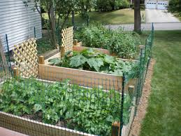 raised bed vegetable garden fence google search gardening