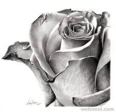 25 beautiful realistic flower drawing ideas on pinterest