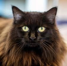 halloween kittens black cats and halloween huffpost