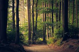 free photo woods trees pathway forest free image on pixabay