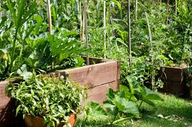 how to work out the best vegetable garden beds for your home