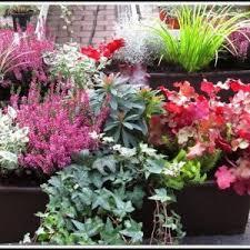 winterharte pflanzen balkon winterharte pflanzen balkon sichtschutz möbel und heimat design