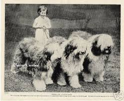 belgian sheepdog embroidery designs old english sheepdog with little 1934 original dog photo