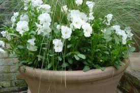 Plant Combination Ideas For Container Gardens 31 Flower Pot Combination Ideas A Container Garden Sheet