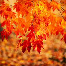 top trees and shrubs for adding fall color to your yard