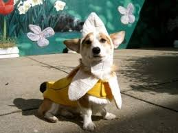 Funny Animal Halloween Costumes 10 Dog Halloween Costume Ideas Images Animals