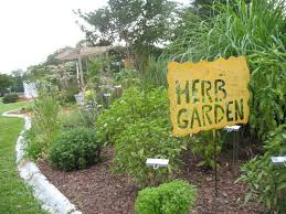 How To Plant A Vegetable Garden In Your Backyard by How To Use Herbs In The Landscape Hgtv