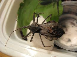 Small Red Bugs On Patio by Normal Biology Inventing The Wheel Bug