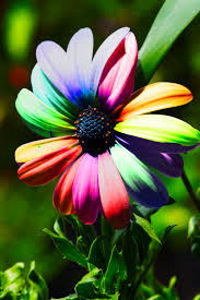 rainbow flower 1 by a6 k on deviantart