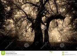 halloween spooky tree silhouette halloween design forest pumpkins stock images image 26709814 dark