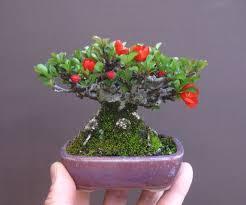 tiny trees brilliant flowers horses bonsai bark