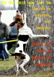 bluetick coonhound treeing this photo reminds me of king claudius in the end of the play when
