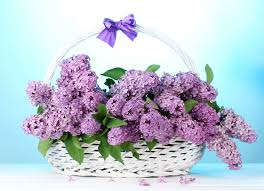 Lilac Flower by Flower Basket Lilac Flowers In 51825 Flowers Photo Flowers