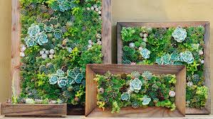 how to make vertical succulent gardens sunset