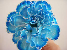 blue carnations dyed carnation blue dye blue carnations carnation and tattoo