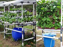 back to vegetable gardening for beginners fruit and in easy ways