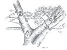 stan dzoga artwork apple tree original drawing pencil nature