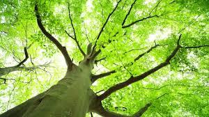 plant a tree environment freak