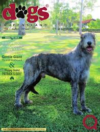 australian shepherd club qld dogs queensland the queensland dog world issue 5 may 2016