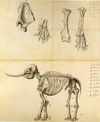 file working sketch of the mastodon rembrandt peale jpg