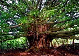 happy arbor day 5 of the world s most beautiful trees hug a