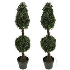 topiary trees topiaries you ll wayfair