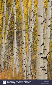sawtooth mountains stanley idaho fall aspen fall color