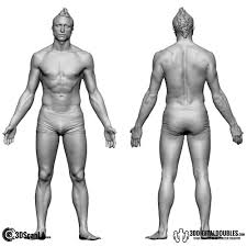 Male Body Anatomy Organs 3d Head And Body Scanning For 3d Character Design Male 3d Body