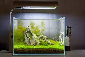 Aquascape Inspiration Aquatics Gallery Archives Page 2 Of 10 The Green Machine