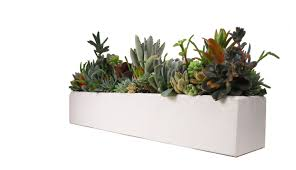 succulent concrete centerpiece arrangement 24 large