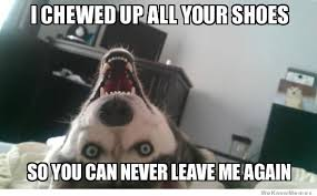 Shoes Meme - overly attached dog meme weknowmemes