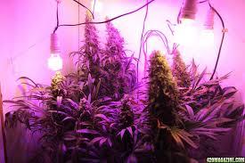 Best 25 Marijuana Grow Lights by Diy Led Grow Light