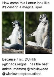 Lemur Meme - 25 best memes about lemur lemur memes