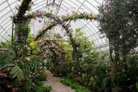 Botanical Garden Orchid Show The Orchid Show On Broadway At New York Botanical Garden The