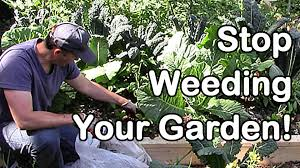 stop weeding your garden youtube